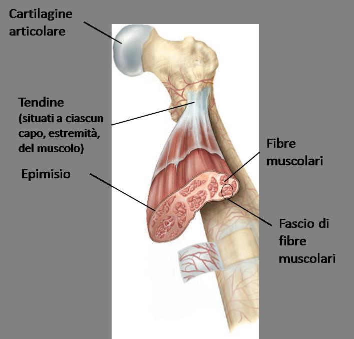 muscolo-hitech-sport